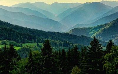 Foreste e lotta alla crisi climatica. Il decalogo di Legambiente sulla biodiversità e il patrimonio forestale