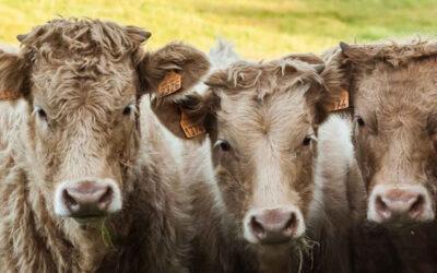 Certificazione benessere animale, associazioni preoccupate chiedono confronto a Patuanelli e Speranza