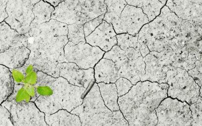 La protezione del suolo ritorna nell'agenda europea del Green Deal