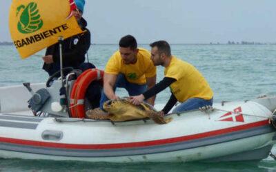 Giornata mondiale tartarughe marine, arrivano i Tartawatchers